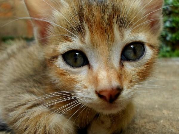 close look of cat face