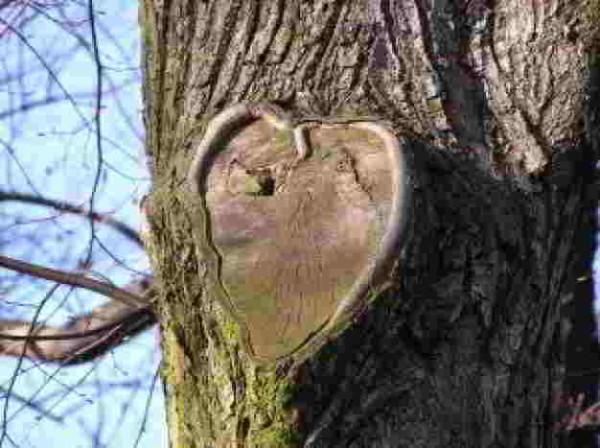 heart-tree-wallpaper