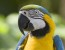 Cute And Sweet Parrot Pictures