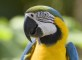 parrot_head