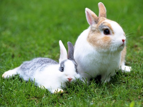 Beautiful Rabbit Photos