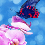 25 Stunning Pictures of Colorful Butterflies