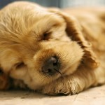 25 Cute and Touching Sleeping Dogs and Puppies Pictures
