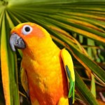 25 Birds Pets Picture you will love.