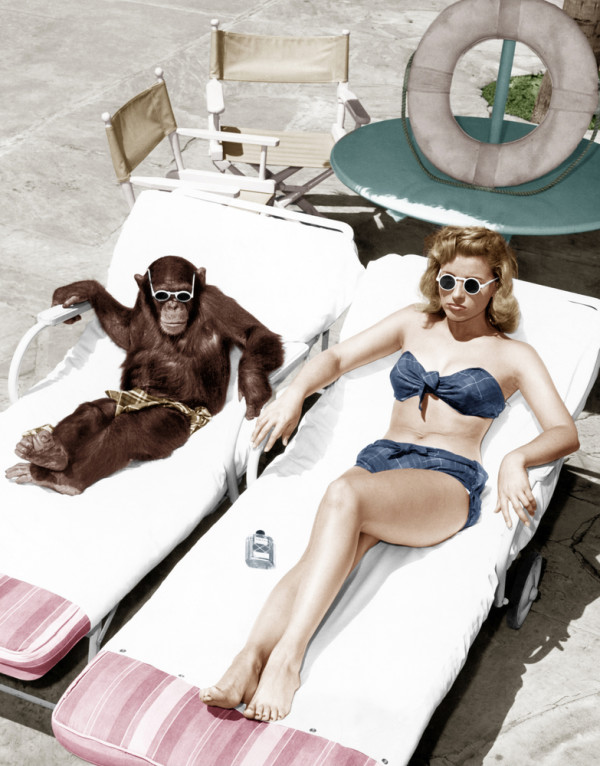 A Monkey on the Beach Next to a Hot Woman