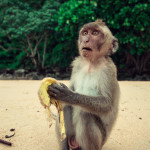 25 Pictures of Funny Monkeys