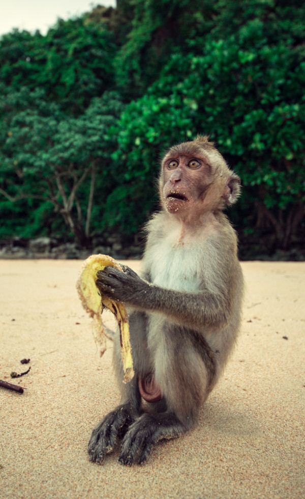 A Surprised Monkey Picture
