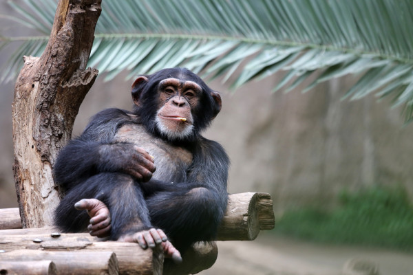 A Picture of a Relaxing Monkey