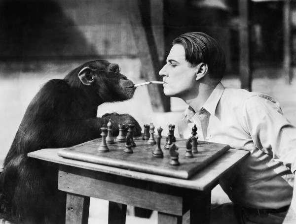 A Monkey Playing Chess and Smoking