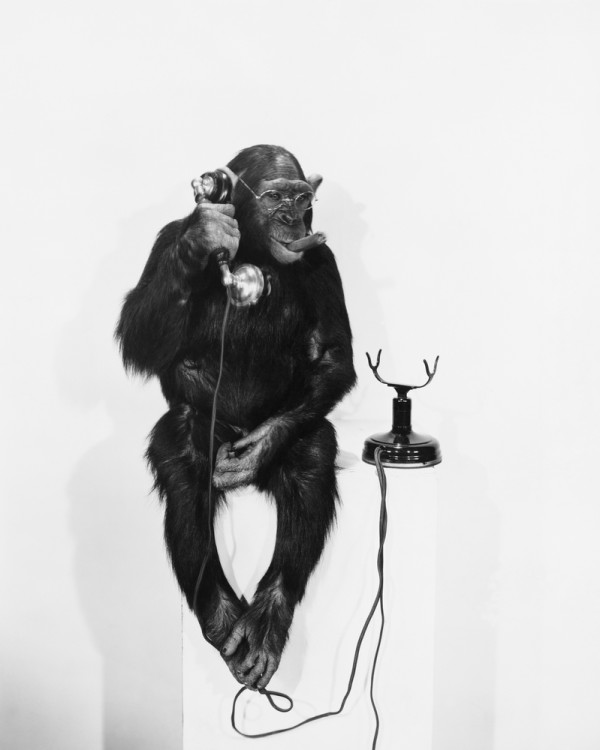 A Picture of a Monkey on the Phone