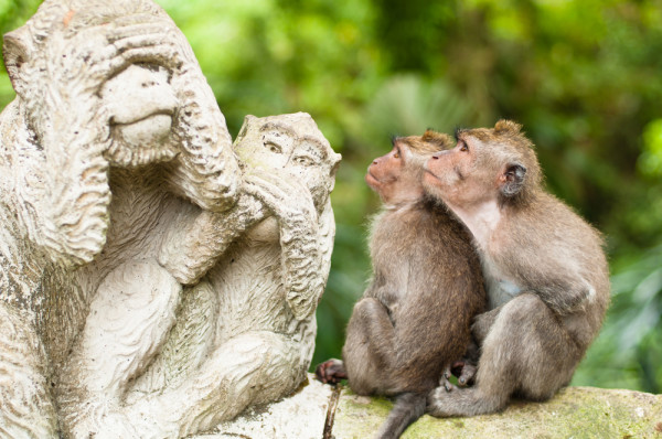 Monkeys Staring at a Statue of Monkeys.