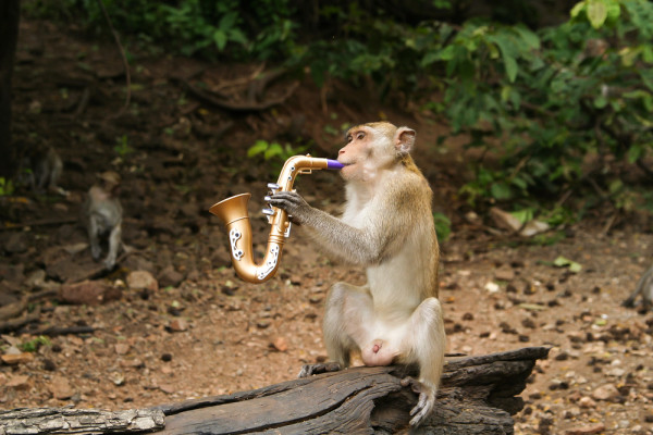Monkey Playing on a Horn