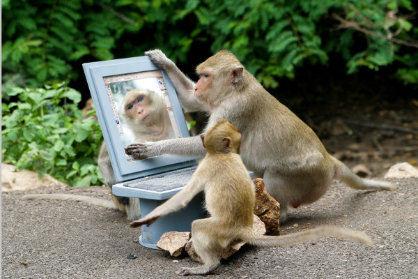 Monkey Photoshoping a picture