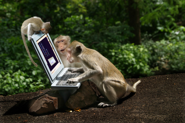 Monkeys Play on a Computer